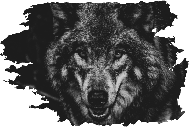 Wolfpack Racing Wolf Driver Relationships